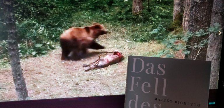 Das Fell des Bären / Matteo Righetto